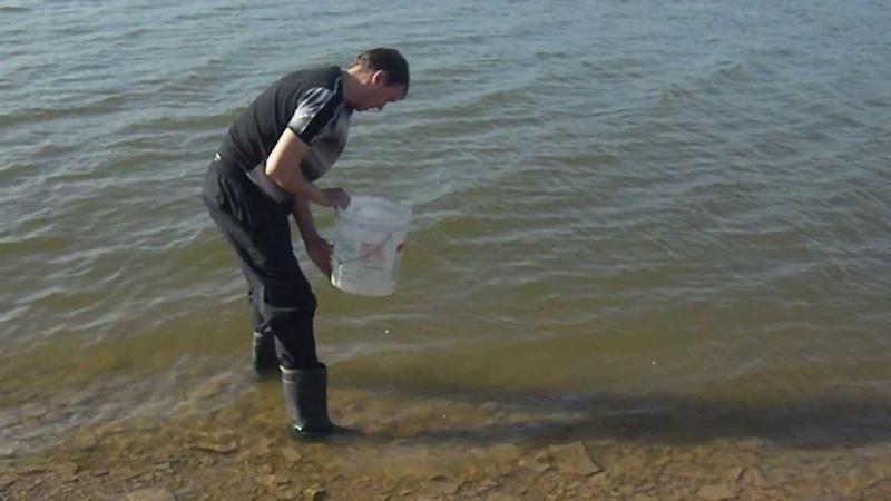 Переселение душ судачок 20 05 13 Донецкое море часть 1 я пляж