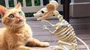 「귀여운 고양이」웃지 않으려 노력하십시오 가장 웃긴 고양이 영화 😽