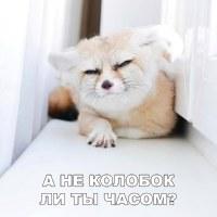 Фотография Андрея Пашкова ВКонтакте