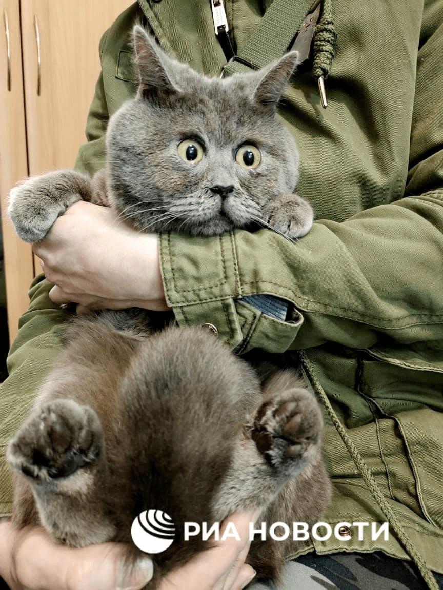 Этот удивленный кот Федя из Ростова стал