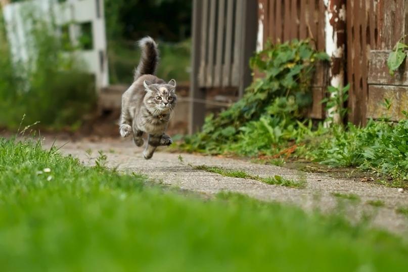 Весенние опасности для кошек и собак, изображение №1