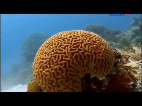 Море жизни BBC документальный фильм дикая природа