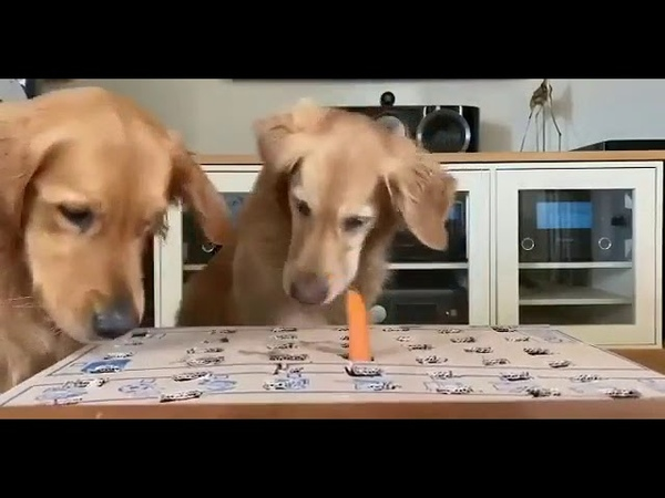 Dogs Play Catch the Carrot