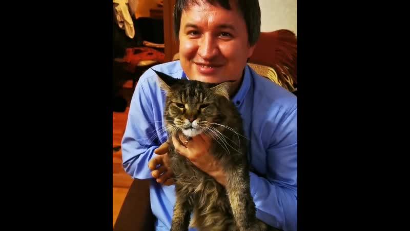 Если кто не знает или забыл то у меня есть огромный кот породы мейн кун Клайд Мне сегодня еле еле удалось его уговорить устр