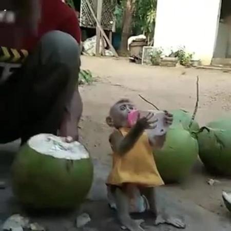 Дегустаторы кокосов · coub коуб