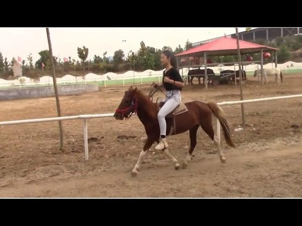 Beauty riding on horse ponyboy