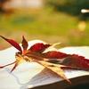 Книги | Литература | Цитаты