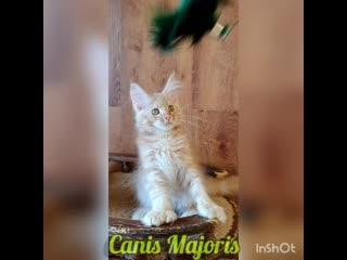 Canis Majoris NOBEL PRIZE