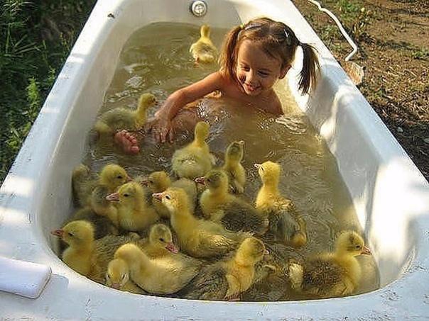 Вот так надо принимать ванну с уточками!