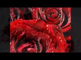 21 мая Всемирный День Роз.