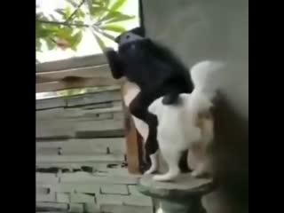А что там у соседей