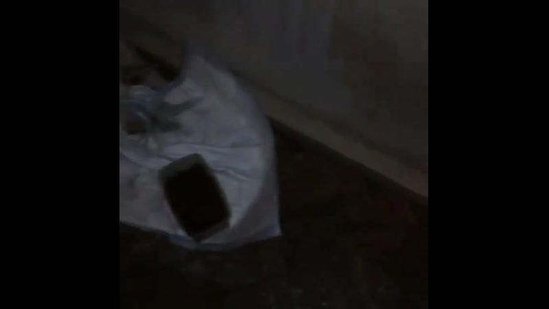 Вчера зооволонтер Валентина @ parhomenko valentina разместила пост о помощи пострадавшей собаке ползающей рядом с Армавирским
