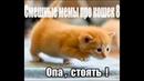 Смешные мемы про кошек 8